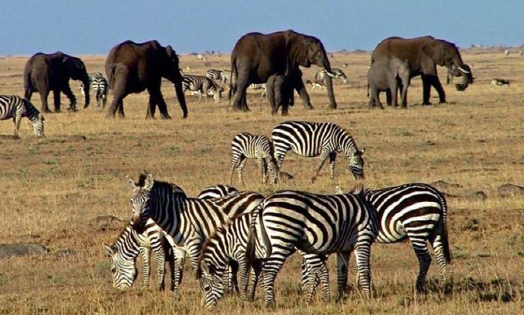 Nairobi - Masai Mara